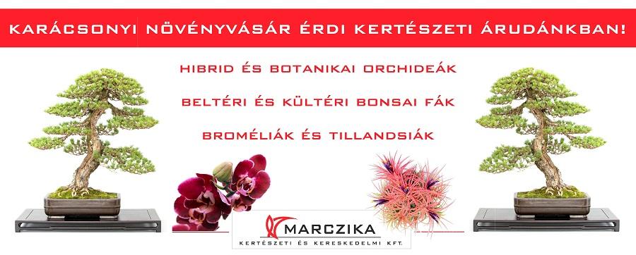 Karácsonyi vásár és akció kertészeti árudánkban bonsai orchidea tillandsia vásárlás online