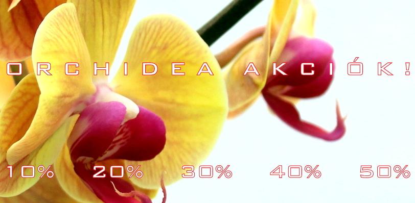 marczika bonsai orchidea tillandsia kerteszet webaruhaz