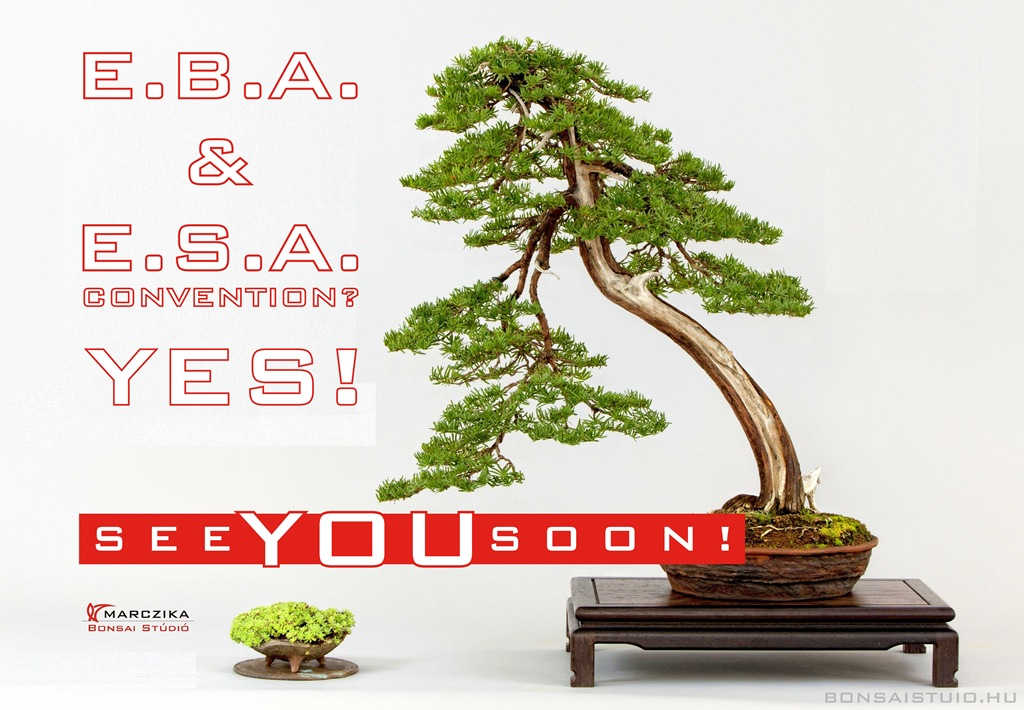 eba european bonsai association bonsai exhibition szekesfehervar hungary